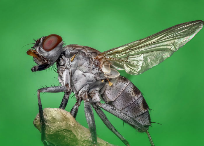 insectes volants